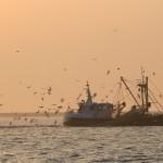 beam-trawler-oscar-bos