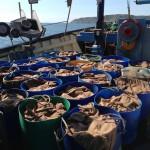 crabs-emma-pearson