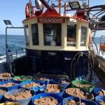 crabs-a-plenty-emma-pearson
