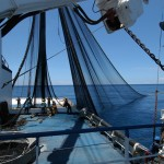 tuna-fishing-c-fadioird-ifremerm-taquet