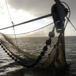 trawling-the-wadden-sea