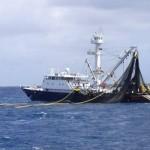 tuna-fishing-vessel-c-fadioird-ifremerd-itano