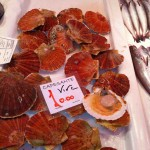 fresh-scallops