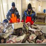 fish-factory