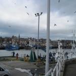 peterhead-harbour
