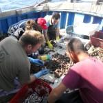 sorting-at-sea