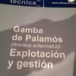 thesis-on-palamos-shrimp