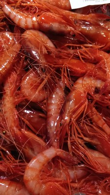 Red shrimp fresh from sea