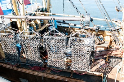 Scallop dredging gear
