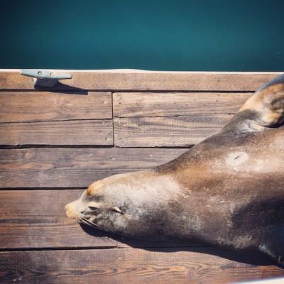 Sea Lion © Emma Pearson